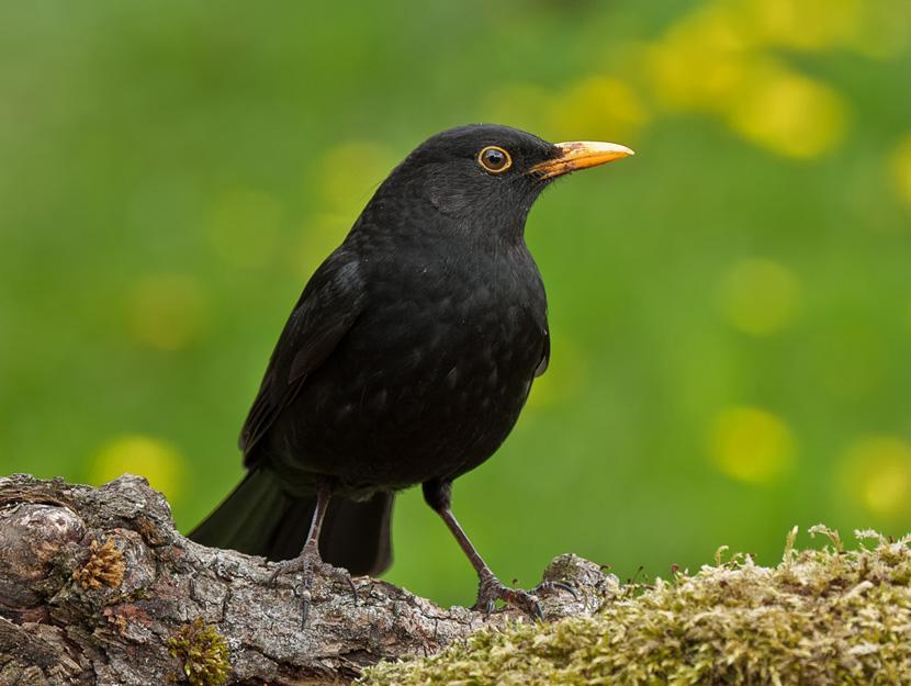 vogelsprache die nachrichten der v gel verstehen lernen. Black Bedroom Furniture Sets. Home Design Ideas